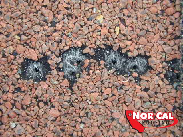 Nor-Cal Roofing: Blistered asphalt roof shingles